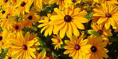 Sommerlaune Blumen